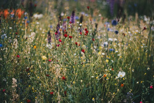 Happiness is: gorgeous wild flowers adorn Ontario meadow